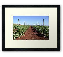 tomatoes plantation Framed Print