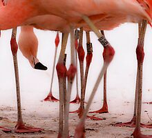 Flamingo Forest by chemival