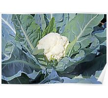Closeup of cauliflower Poster