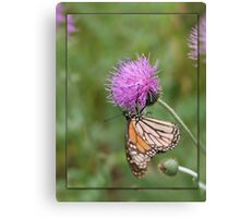 Monarch on Thistle Canvas Print