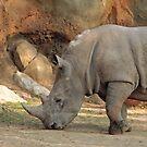 Rhinoceros by SuddenJim