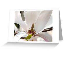 Magnolia V Greeting Card