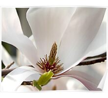 Magnolia V Poster
