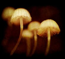tiny toadstools by Clare Colins
