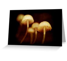 tiny toadstools Greeting Card
