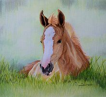 """""""Young Flame"""" - Criollo colt by SD 2010 Photography & Equine Art Creations"""