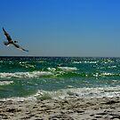 Sailing Seagull by Dawn di Donato