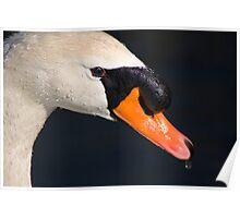 Mute Swan Head Shot Poster
