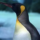 king penguin by Trish Threlfall