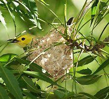 Nesting in Tennant Creek, NT by soulwhisperer