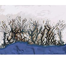 """Winter Reach"" Photographic Print"