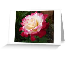 Double Delight as a full bloom Greeting Card