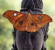 Saturniid moth by jimmy hoffman