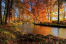 River lazily flows through the woods. by Fred Taylor