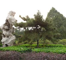 China:Rock and Tree by Phillip Wayne