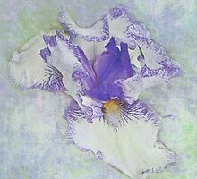 Iris - White with Purple Accents by MotherNature2
