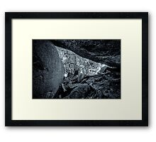 Jungle Black and White Framed Print