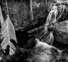 Black and White Forest by Glauco Meneghelli