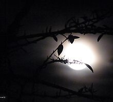 Supermoon 19/3/11 by Photos - Pauline Wherrell