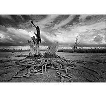 Seletal remains ... Photographic Print