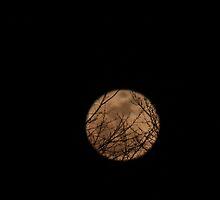 Super Moon Magic by Renee Blake