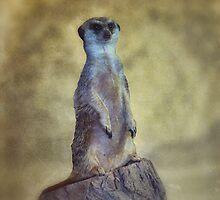 Meerkat by KathleenRinker