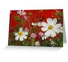 Cosmos on Red Greeting Card