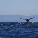 Whale Fluke by citrineblue
