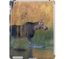 Maine Moose in the water iPad Case/Skin