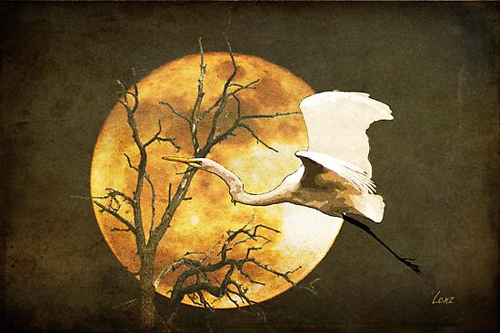 Egret Flying In Moonlight by George Lenz