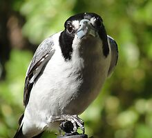 Butcher Bird by ElizabethCairns