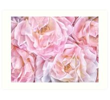OH SO DELICATE ROSE Art Print
