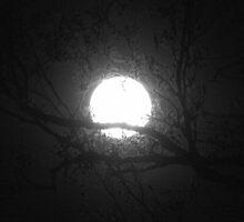 Enjoying a very bright Super Moon by Hans Bax