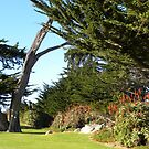 The Lover's Point  Park Split Trunck Cypress by Sandra Gray