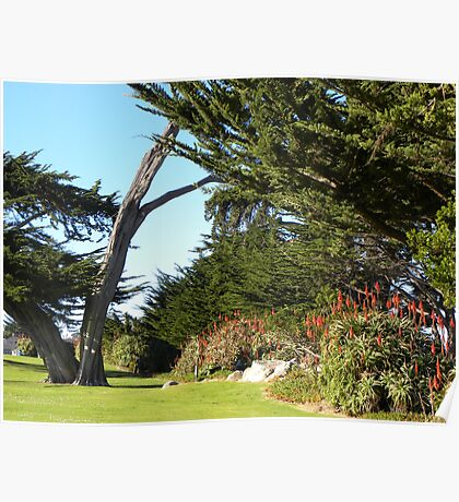 The Lover's Point  Park Split Trunck Cypress Poster