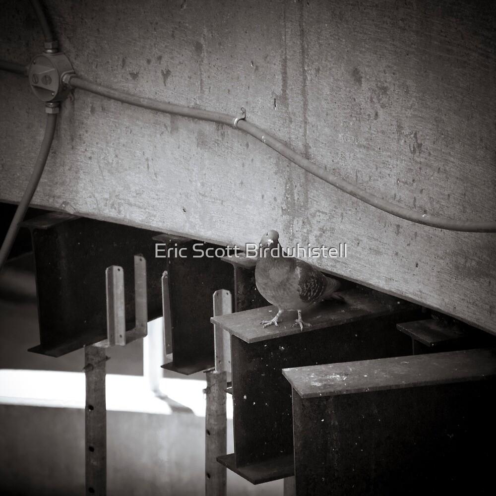 Inquisition by Eric Scott Birdwhistell