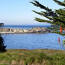 Lover's Point Beach and Sea Lion Rock by Sandra Gray
