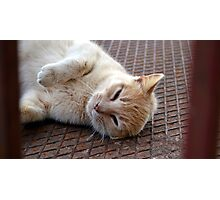 Stray Cat, Corfu. Photographic Print