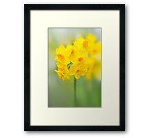 Daffodil Joy Framed Print