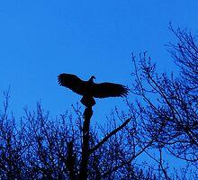 Turkey Vulture silhouette by KyleMWhite