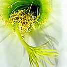 Spring Dance by Linda Sparks