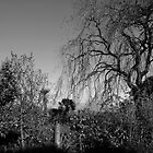 Wild Weeping Willow by moor2sea