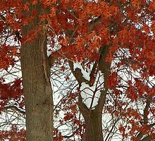 Message of Love in the Tree -2 by Nora Caswell