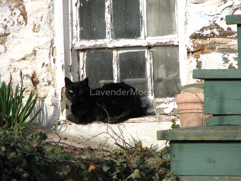 Lazing Sunday Away by LavenderMoon