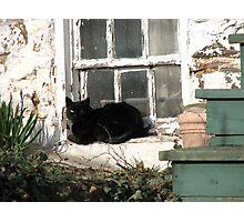 Lazing Sunday Away Photographic Print