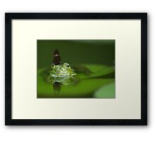 Butterfly And Frog Framed Print