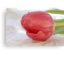 Sweet pink tulip Canvas Print