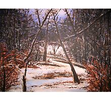 Snowy Woods Photographic Print