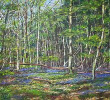 Suckley Woods Bluebells by LauraJennings