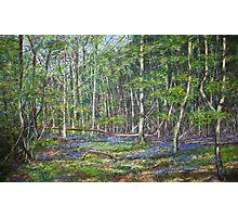 Suckley Woods Bluebells Photographic Print